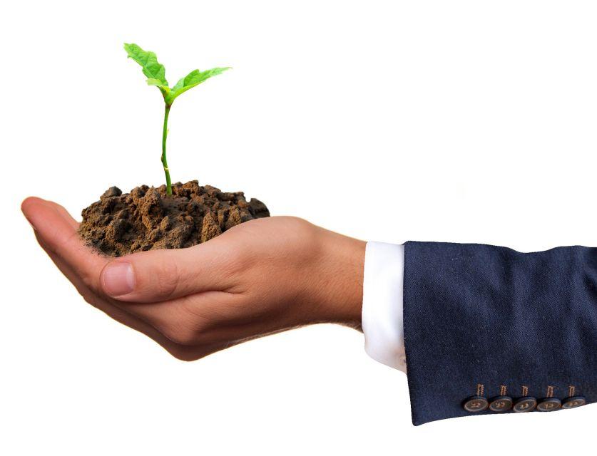 Plante poussant dans les mains